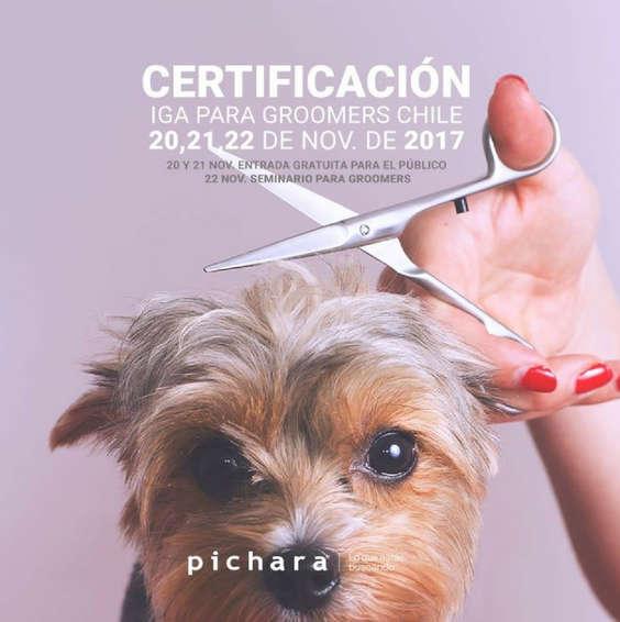 Ofertas de Pichara, Todo para tu perro